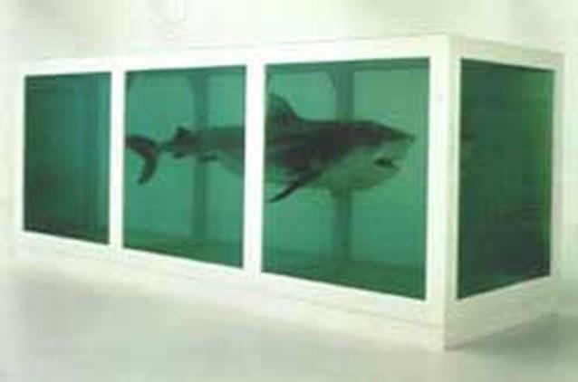 Rottende haai wordt probleem