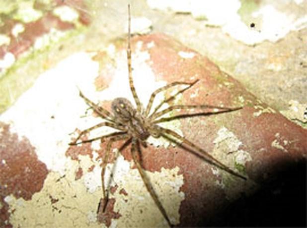 Man probeert spin te doden en blaast zichzelf op