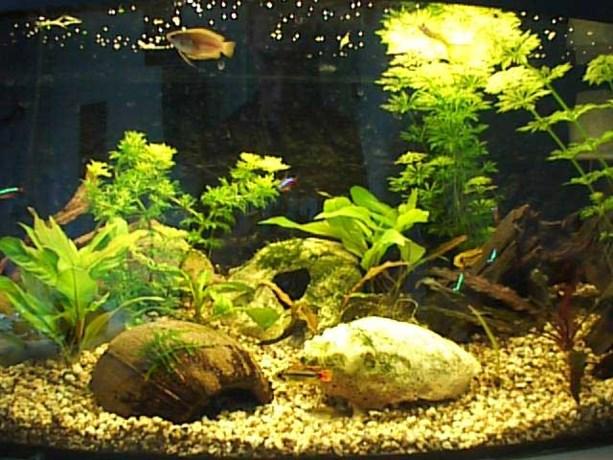 Jarige Aquariumclub pakt uit