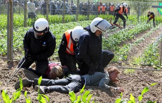 Beschadigd ggo-aardappelveld in Wetteren levert toch resultaten op