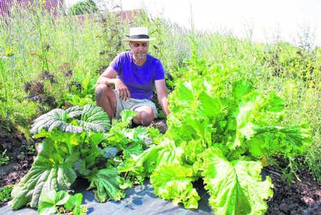 Neem abonnement en pluk zelf jaar verse groenten