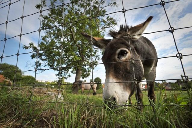 Deelnemers Amerikaanse 'Fear Factor' moeten ezelsperma drinken