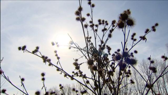 Wetenschappers slaan pollen-alarm