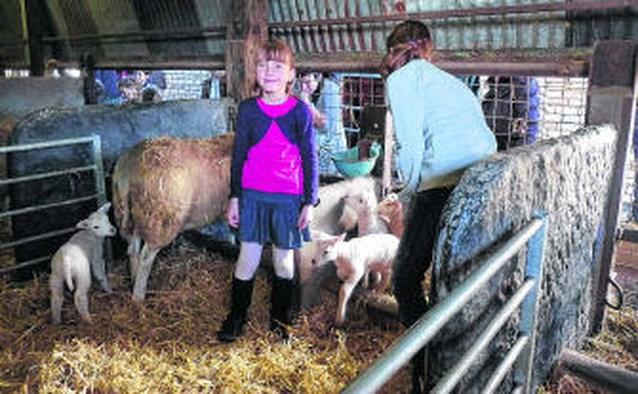 Lammetjes lokken massa volk naar kinderboerderij