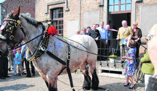 Vernieuwd museum Belgisch Trekpaard geopend
