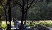 IN BEELD. Vliegtuigcrash in Kleine-Brogel