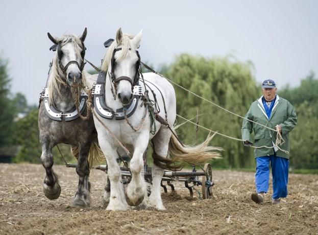 Trekpaarden demonstreren