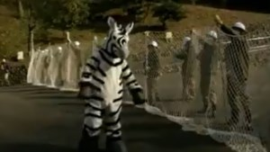 VIDEO. Japanse zoo oefent voor ontsnapping zebra