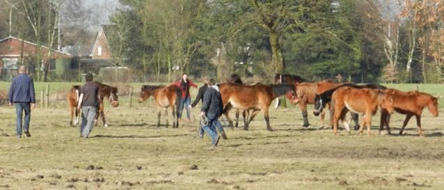 Elf verwaarloosde paarden in beslag genomen