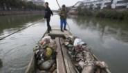 Al meer dan 13.000 varkens uit rivier bij Shanghai gevist