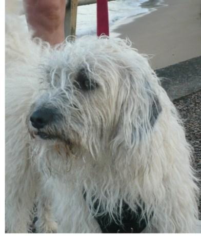 Hond vermist na ongeval