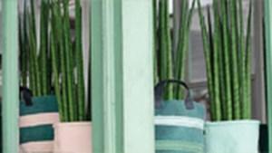 Planten zorgen voor zuivere lucht