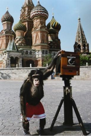 Foto's gemaakt door aap brengen 59.000 euro op