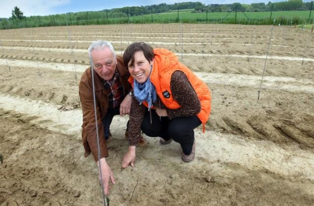 Duizenden wijnstokken geplant op Dappersveld