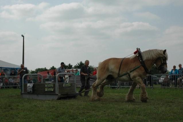 Trekpaarden sleuren bijna twee ton