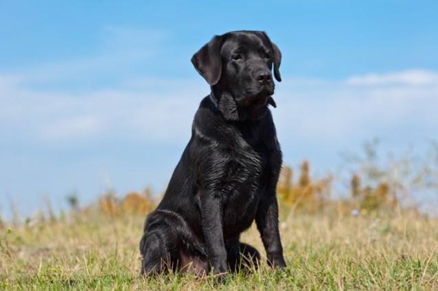 Hond rukt zich los van blind baasje en redt baby