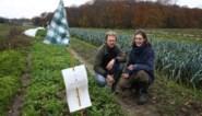 Zelfoogstboerderij Wijveld dringend op zoek naar 250.000 euro