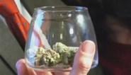 Colorado: oorlogsveteraan is eerste cannabisklant