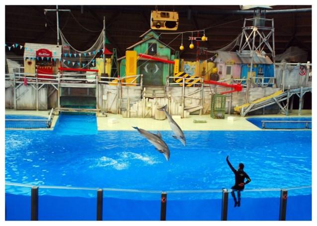 Boudewijn Seapark verbetert levensomstandigheden van dolfijnen