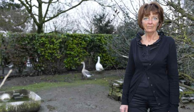Elf eenden spoorloos verdwenen