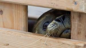 Eerste zeehondenpups aangespoeld