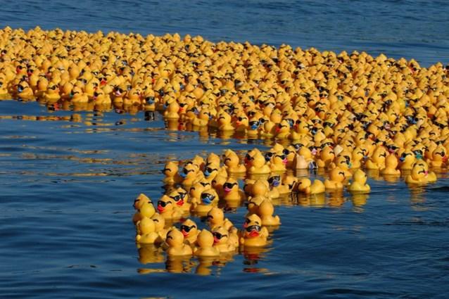 Duizenden badeendjes zwemmen voor het goede doel