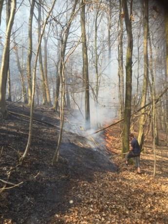 Brand legt drie hectare bos in de as