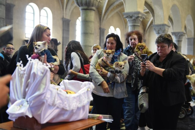 Hond krijgt begrafenis in kerk