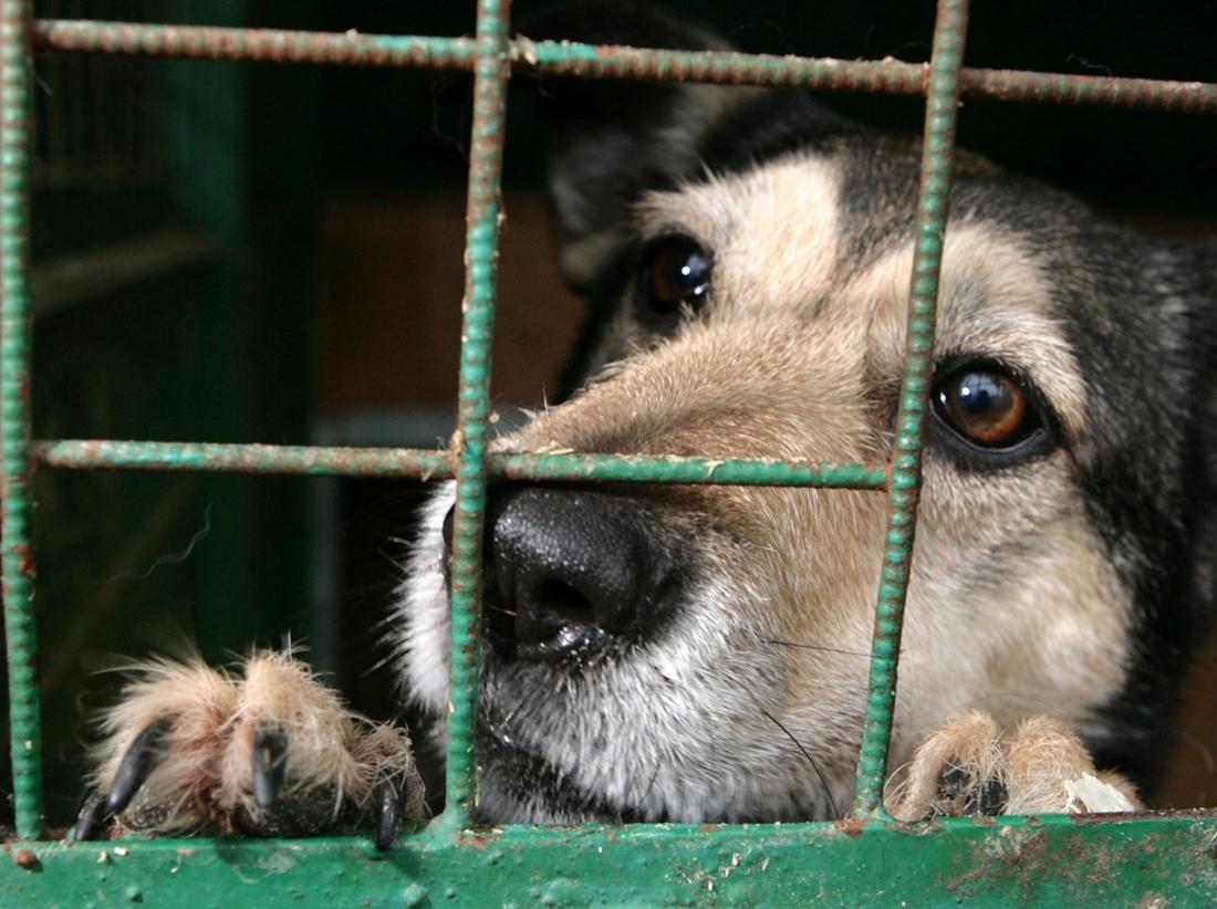 Ставропольский приют для животных фото