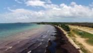 Caraïben overspoeld door zeewier: zon, zee, strand en de geur van rottende eieren