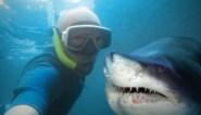 Afgelopen jaar meer doden door selfies dan door haaienaanvallen