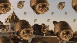 Kattenvideo weet imago stad Brussel weer op te poetsen