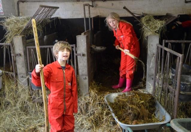 """Leerlingen volgen les op boerderij: """"Koeien zijn eigenlijk hele lieve dieren"""""""