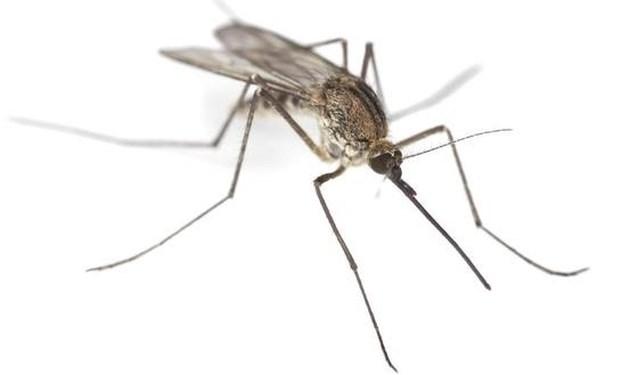 Muggenplaag op komst: zo jaagt u vervelende insecten weg