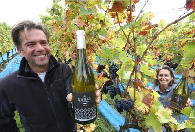 Ook wijndomein Nobel verwacht goede oogst en krijgt ondertussen gouden label