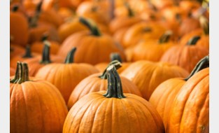 Halloweenthema moet dinsdagmarkt versterken