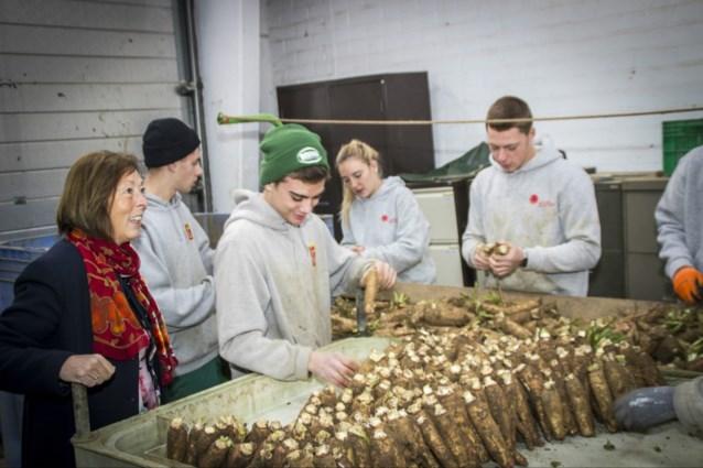 20.000 leerlingen telen witloof met witloofbox