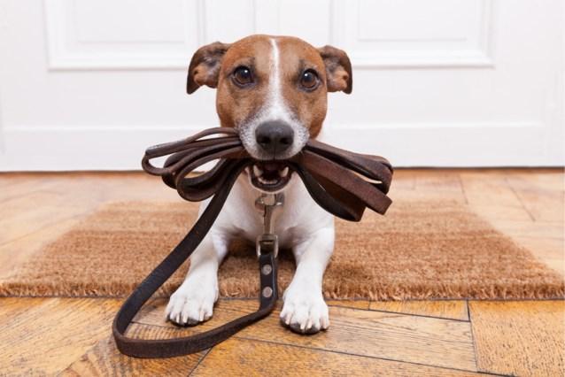 Scheidend koppel vraagt rechter om hun honden als kinderen te behandelen. Dit was zijn antwoord