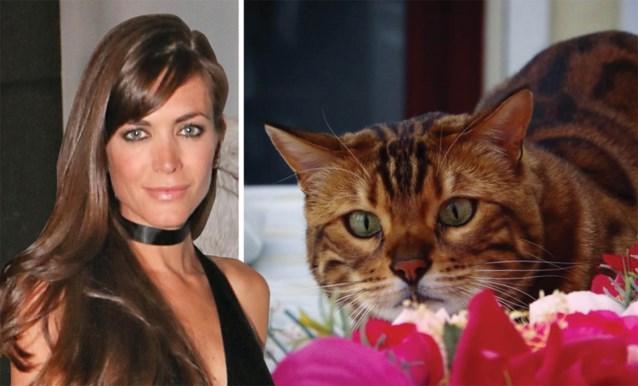 Deze kat is zo speciaal dat ze dezelfde manager krijgt als Astrid 'Bryan' Coppens