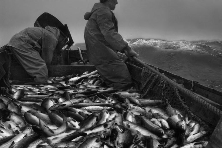 Na de pangasius: ook aan deze vissen hangt een geurtje