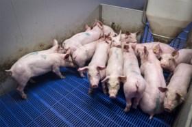 COLUMN. Waarom iedereen zou moeten meedoen aan Dagen Zonder Vlees