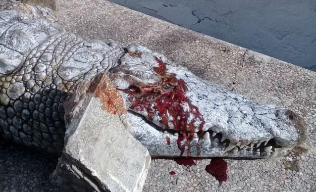 Krokodil sterft in zoo nadat bezoekers ze bekogelen met zware stenen