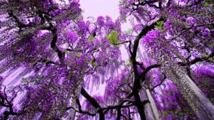 Zijn deze Japanse tuinen in de lente de mooiste plek op aarde?