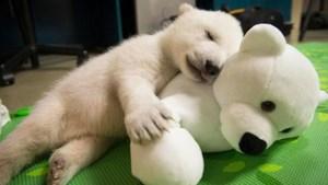 Kindjes met knuffels zijn schattig, maar diertjes met knuffels zijn helemaal buiten categorie