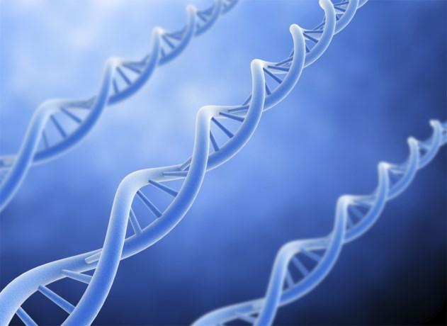 Intelligentie is genetisch bepaald: wetenschappers ontdekken 40 nieuwe genen die bepalen hoe snugger je bent