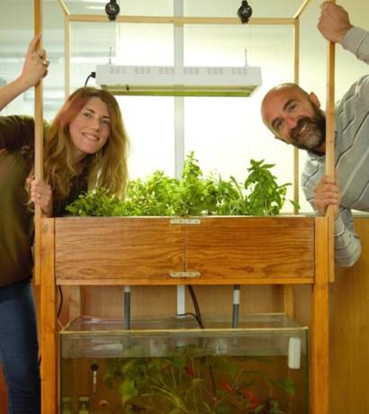 Deze vissen helpen je groenten kweken (en eindigen zelf op je bord)