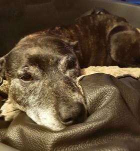 Deze hond werd depressief wanneer baasje weg moest. Zijn eigenaar bedacht deze ingenieuze oplossing