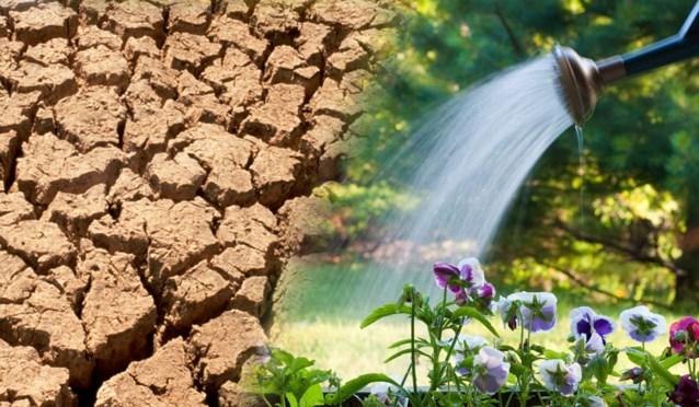 """Grootste droogte in Vlaanderen in halve eeuw: """"Gebruik drinkwater alleen waarvoor het dient"""""""