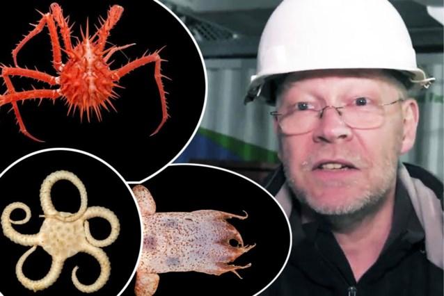 Belg ontdekt nieuw leven in Australische zee: van een vis zonder gezicht tot lichtgevende krabben