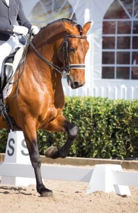 Fiscus opent jacht op fraude met elitepaarden